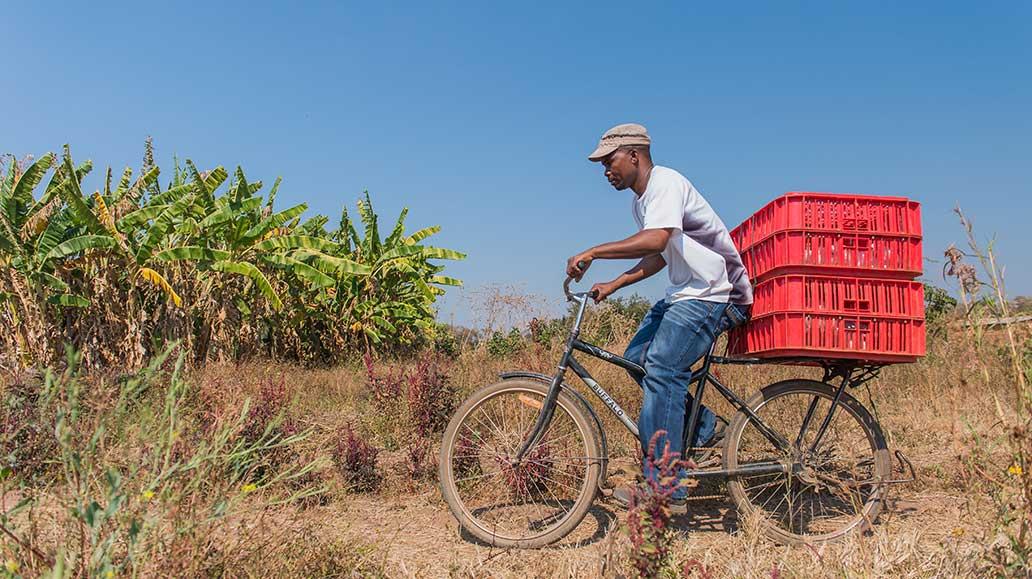 Ein Fahrrad kann ein super Transportmittel sein: Günstig, umweltfreundlich und flexibel.